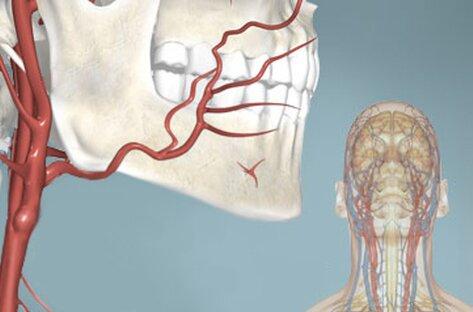 УЗИ (УЗДГ, дуплекс) сосудов головы и шеи сделать в СПб, доступные цены, Медицинский центр